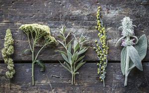 Какие травы необходимы для приготовления абсента